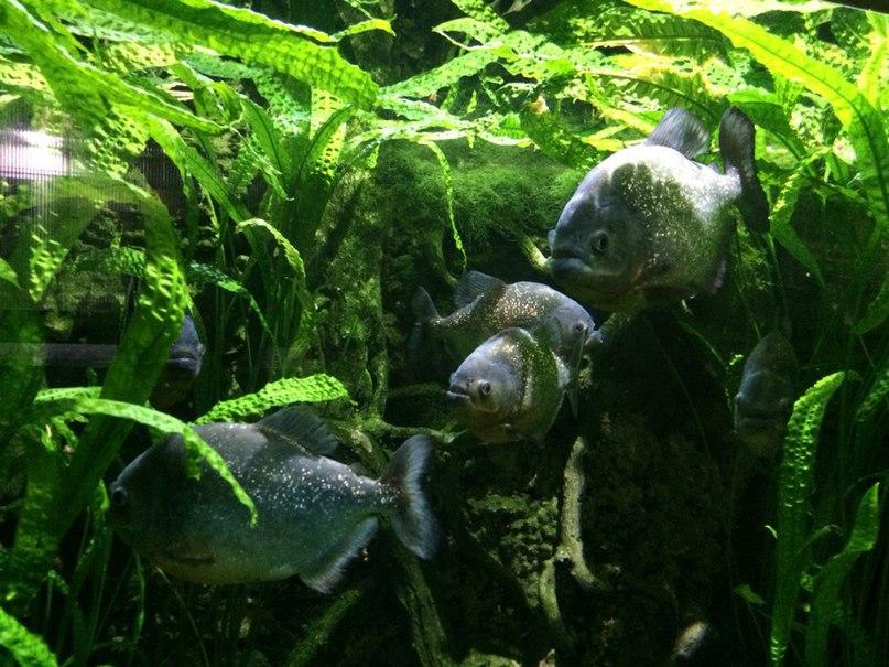 Терапия живой средой. Городской аквариум