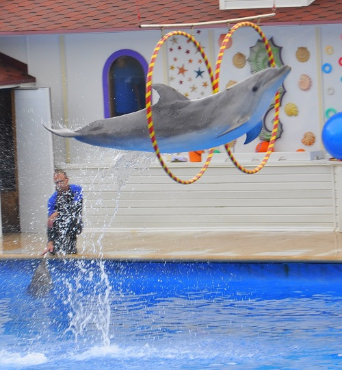 Дельфинотерапия, и такое бывает!