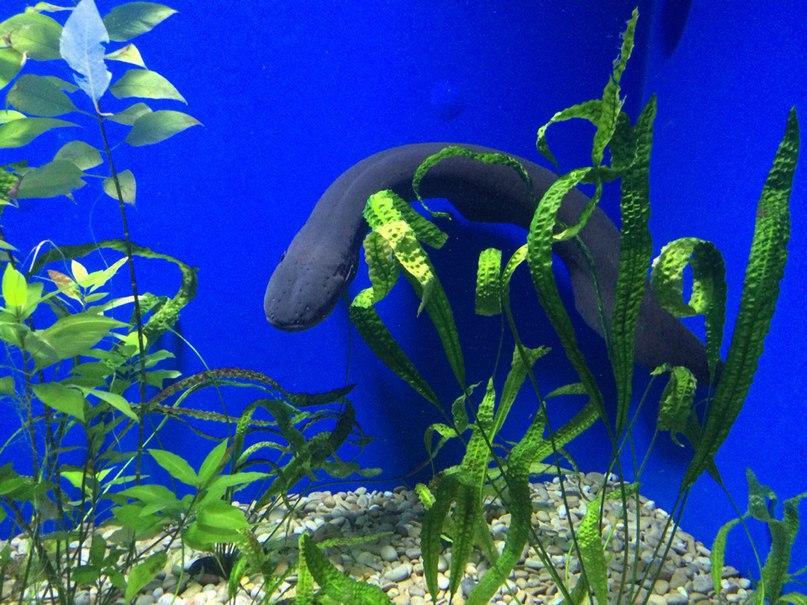 Терапия аквариумом, что может быть лучше